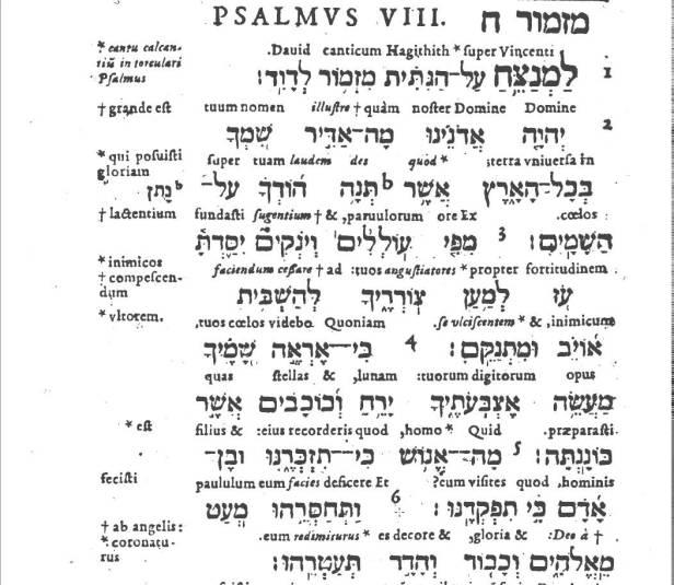 salmo-8